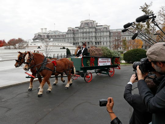 The Official White House Christmas Tree arrives at