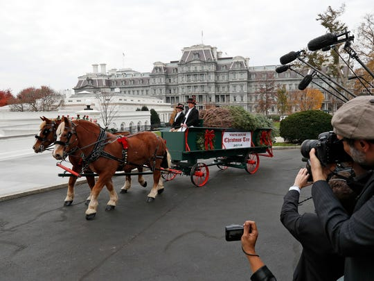 The Official White House Christmas Tree arrives at the White House in Washington,  Friday, where first lady Michelle Obama received it. The Balsam-Veitch fir from Mary and Dave Vander Velden, of Oconto, Wis., is 19 feet tall and 12 feet wide.