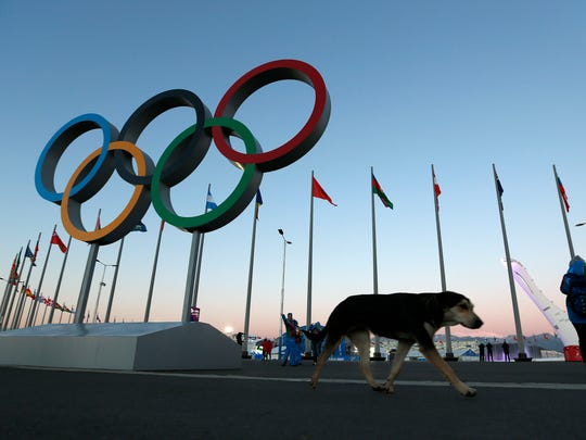 A stray dog walks past the Olympic Rings in Olympic Park, three days before the start of the 2014 Winter Olympics, Monday, Feb. 3, 2014, in Sochi, Russia. A pest control company which has been killing stray dogs in Sochi for years told The Associated Press on Monday that it has a contract to exterminate more of the animals throughout the Olympics. (AP Photo/Robert F. Bukaty)