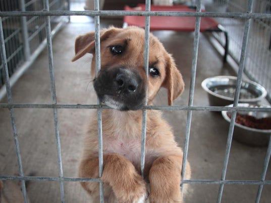Ouachita Parish Animal Shelter