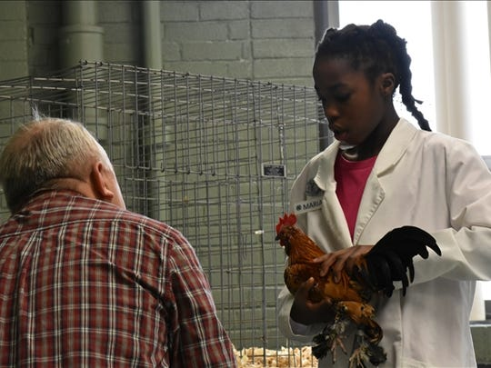 Maria Klein of Chambersburg, Franklin County tells the judge about her bantam rooster in Youth Poultry Showmanship at the Pennsylvania Farm Show in Harrisburg. She placed fifth.