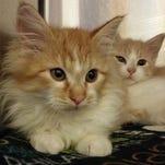 Photos: Too adorable! Adoptable pets in the Reno area