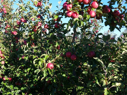 Crist Brothers Orchards in Walden suffered damage from