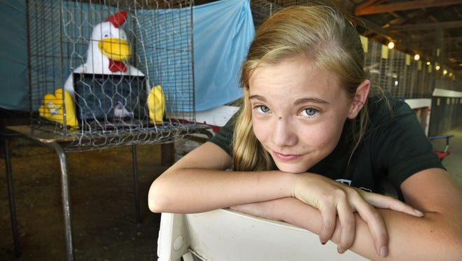 Courtney Larson of St. Joseph attended the 2015 Stearns County Fair  in Sauk Centre without her rooster Fluffy. Poultry is back this year.