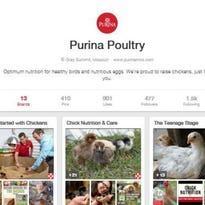Purina launches poultry Pinterest page
