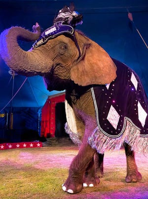 The Kelly Miller Circus, one of the few traveling big-top shows in the country still using wild animals, is coming to West Milford's Hewitt section for two performances on June 12. Tickets will be $6 for children and $12 for adults if purchased in advance.