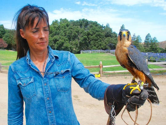 Kathleen Tigan of Tactical Avian Predators holds Wilma,