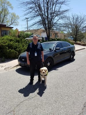 K-9 Agent Joey with his handler, Agent Owen Pena of the New Mexico Attorney General's Office. Joey, an electronic device detection dog, was raised by Marysville resident Carolyn Crowe as a leader dog.