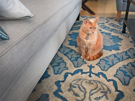 Toby, the resident cat, enjoys a moment resting on a portion of the Surya area rug.