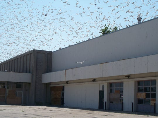 Thousands of gulls called the vacant Lakeview Centre