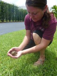Jennifer Southall keeps this cane toad for educational