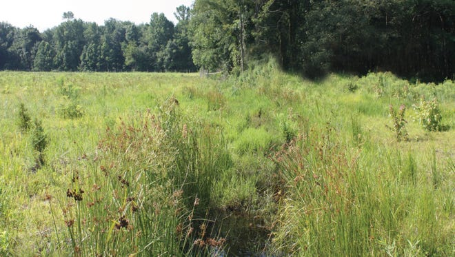 Property view from Perrineville Road. This latest open-space acquisition brings Monroe close to 8,000 acres of preserved property.
