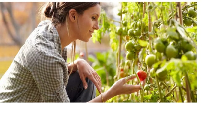 A step-by-step guide to home gardening.