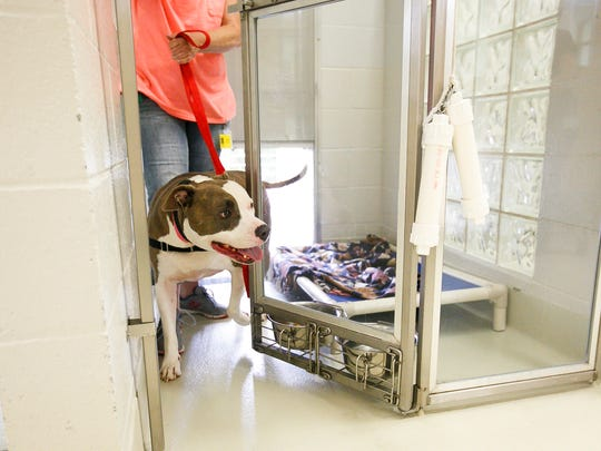 Three-year-old Elsa is taken out for a walk at the Marion County Dog Shelter on Tuesday, Aug. 8, 2017. Dogs at the shelter are usually taken for walks and exercise by one of the shelter's volunteers, of which there is a core group of 15-20 members.