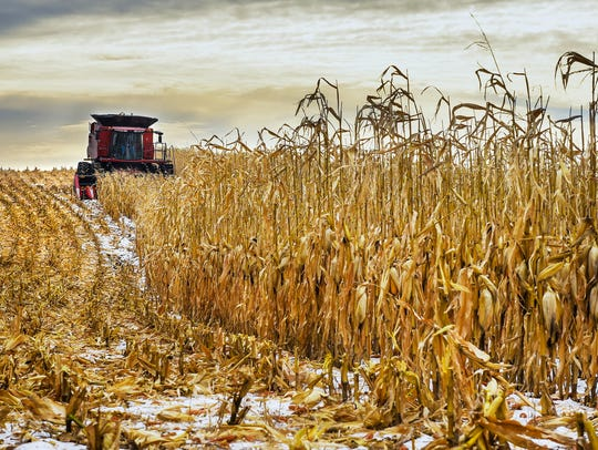 Steve Brinkman runs the combine through a field of