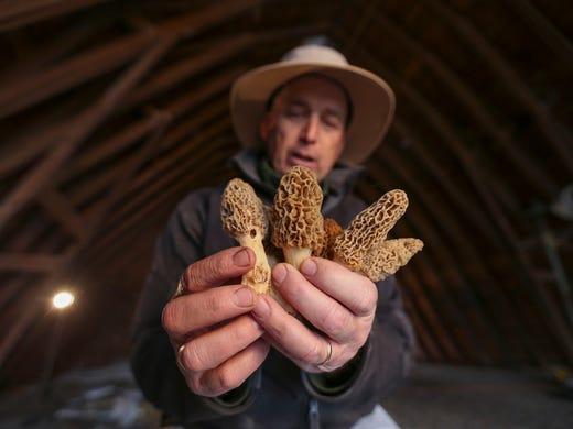 Greg Rinehart of Rinehart's Family Farm, displays some freshly picked morel mushrooms on Friday, May 2, 2014, at his farm outside Odgen, Iowa in rural Boone County.