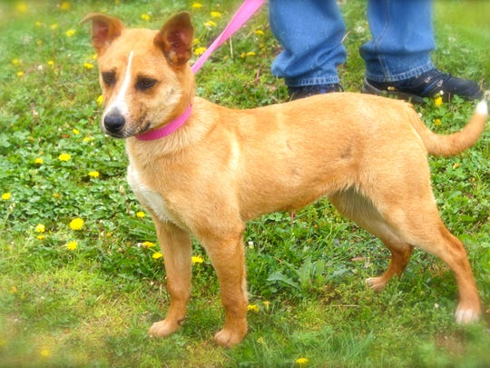Flip is a 6 month old heeler mix that found his way