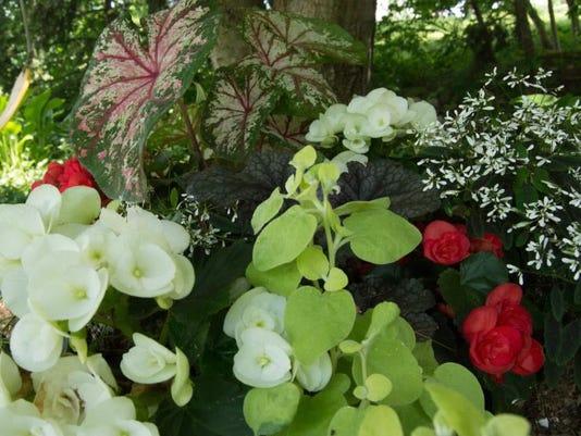 Be your own garden editor and critique your garden.