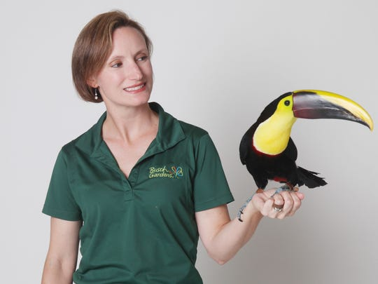 Susie Krzyzanowski, of Busch Gardens Tampa Bay, holds a Swaison toucan named Cyrano, which is one of many animal ambassadors they use to educate the public.