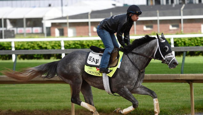 May 5, 2016; Louisville, KY, USA; Exercise rider Ovel Merida works Kentucky Derby hopeful Destin during workouts in advance of the 2016 Kentucky Derby at Churchill Downs. Mandatory Credit: Jamie Rhodes-USA TODAY Sports