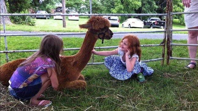 On Sept. 26-27 Eagle Bend Alpacas will hosts its ninth annual National Alpaca Farm Days.
