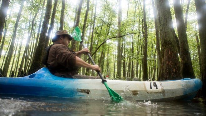 """Johnny Campbell  paddles around trees in the Wolf River's """"Ghost River"""" section during a guided trip in Fayette County Tennessee."""