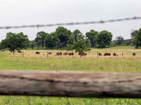bison AP18170723475181.jpg