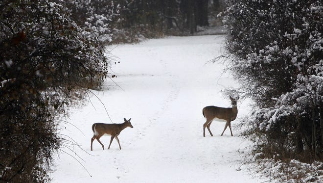 Two deer roam a path in the woods at Mendon Ponds Park.