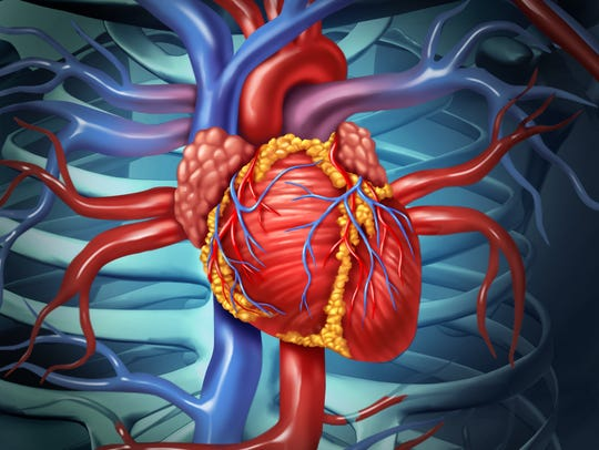 Cardiotoxicity is the occurrence of heart dysfunction