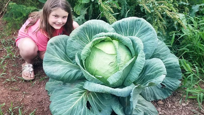 Emma Sheehan of Simpsonville and her award-winning cabbage.