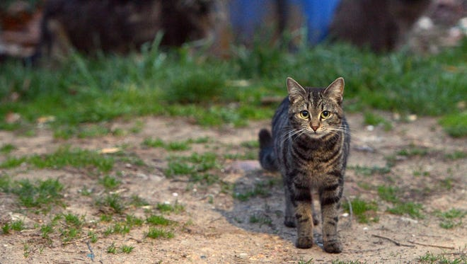 File photo: Feral cats running loose in a northeast Washington, DC neighborhood on April 4, 2014.