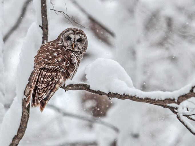 While some snow birds head south for the winter, other Hoosiers are bundling up and getting ready to enjoy the first measurable snowfall of the season. Where can you have some snowy fun? Check out these local options. By T.J. Banes
