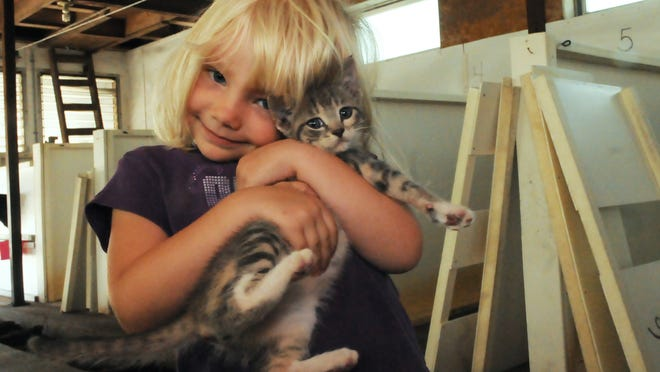 Four-year-old Ruby Haberli is the unofficial caretaker of the kittens, including Nayla, on the Haberli Farm.