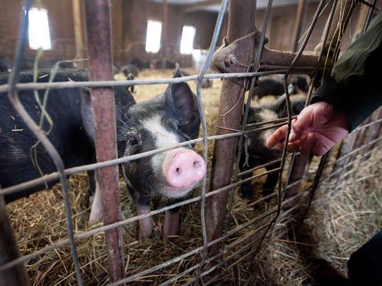 -BUR 0221 pig farm C1.jpg_20140224.jpg