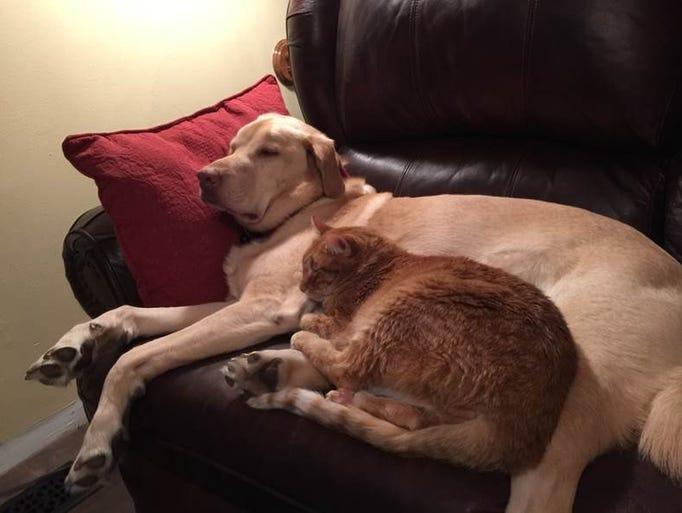 NOV. 28 – Kaos and Princess Carrot like to snuggle