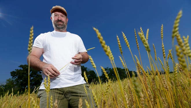 John Limbach stands in a field of spelt wheat in Grafton. Spelt is an ancient ancestor of modern wheat cultivated since approximately 5000 B.C.  Limbach and his business partner, Nichols Novaczyk, mill spelt and other grains into flour at their Grafton Stone Mill.