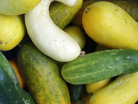 Cucumber for Gardening: Do it now