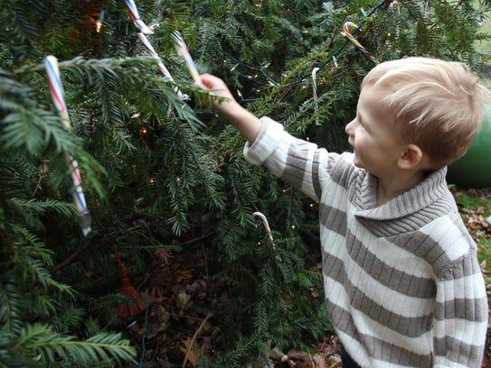 Jackson Thomas, 2, chooses a candy cane off a Christmas