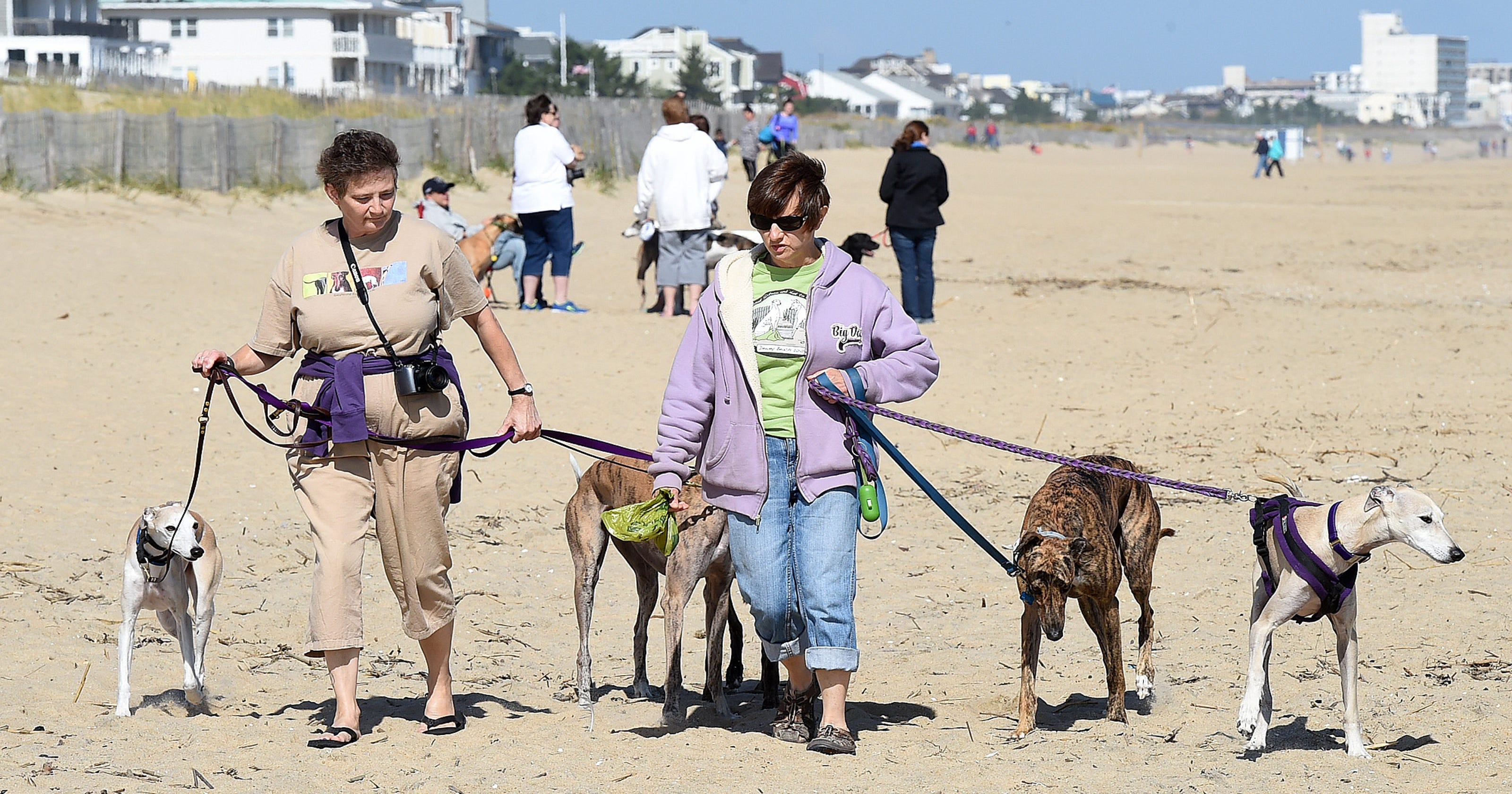 Ocean City Delaware Beaches Have Pet Friendly Spots