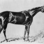 Hindoo, winner of the 1881 Kentucky Derby. Photo by Caufield & Shook No date available.