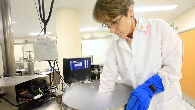 Theresa Mathieson, biospecimen manager for the Komen Tissue Bank, reaches in the tank to retrieve a rack of samples.  The Susan G. Komen for the Cure Tissue Bank at the IU Simon Cancer Center has storage tanks for the breast tissue samples that are kept in the vapor phase of liquid nitrogen.