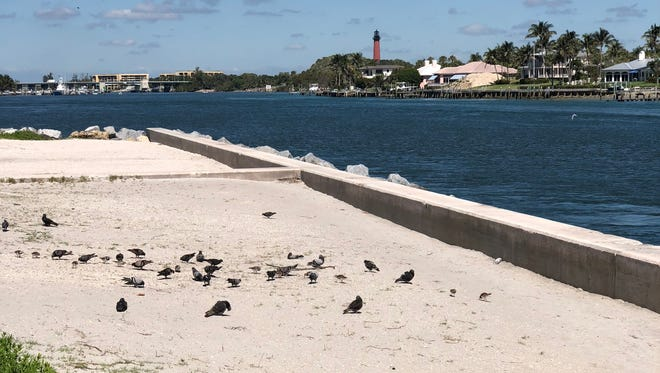 A view of Jupiter Inlet, from Dubois Park