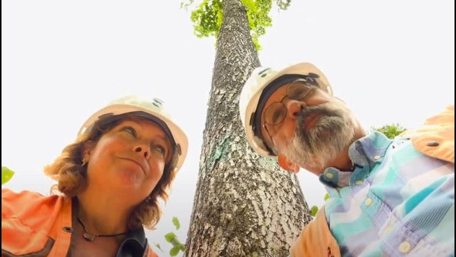 Georgia Peterson and Bill Cook figure out how to measure the height of a tree.