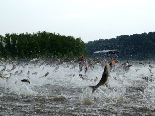Invasive Asian Carp Less Than Miles From Lake Michigan - Asian carp map 2016 non us
