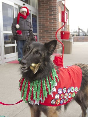 Three-year-old Magic Genie, a Belgian Tervuren, rings a bell either held in her mouth, or knocks smaller sleighbells mounted to a stand with her front paw to inspire donations to the Salvation Army.