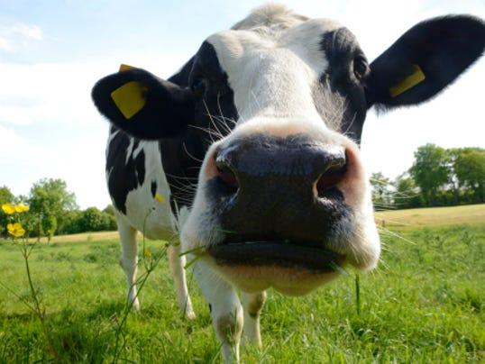COW-Photo.jpg