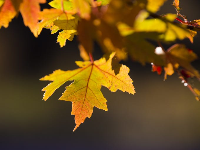 Trees and leaves change color with the arrival of fall