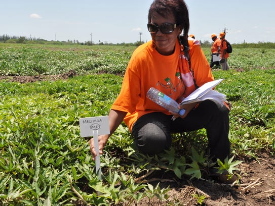 Maria Andrade poses in a field of drought-resistant