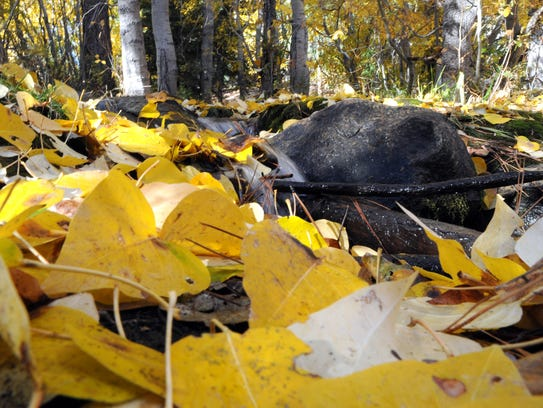 Leaves blanket the ground at the Galena Creek Regional