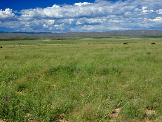 Especially on a wet year, the grasses on Otero Mesa